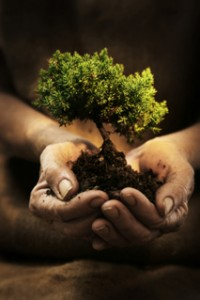 tree_in_hands